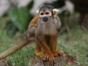 Ваксината срещу ебола със 100% успех върху животни