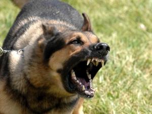 Куче нахапа жена