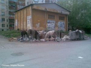 """Коне ядат фекалии в """"Столипиново"""" /снимки/"""