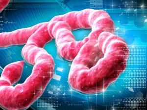 Ново лечение срещу Ебола