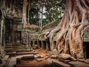 21 снимки на природата, която побеждава цивилизацията