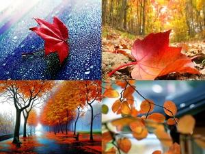 Невероятни есенни снимки