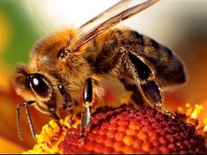 Пчелите умни ли са колкото една навигационна система?