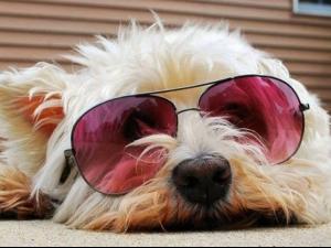 Сладки кучета с очила
