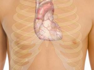 Интересни факти за човешкото тяло
