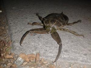 Хлебарки-мутанти нападнаха Тракия СНИМКИ
