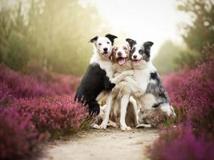 Стоплящи сърцето фотоси на кучета