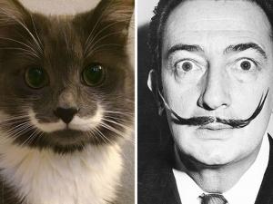 Като две капки вода – котки и известни личности СНИМКИ