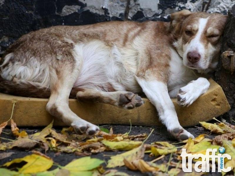 """""""Четири лапи"""" откри изложба със снимки на бездомни животни в София СНИМКИ"""