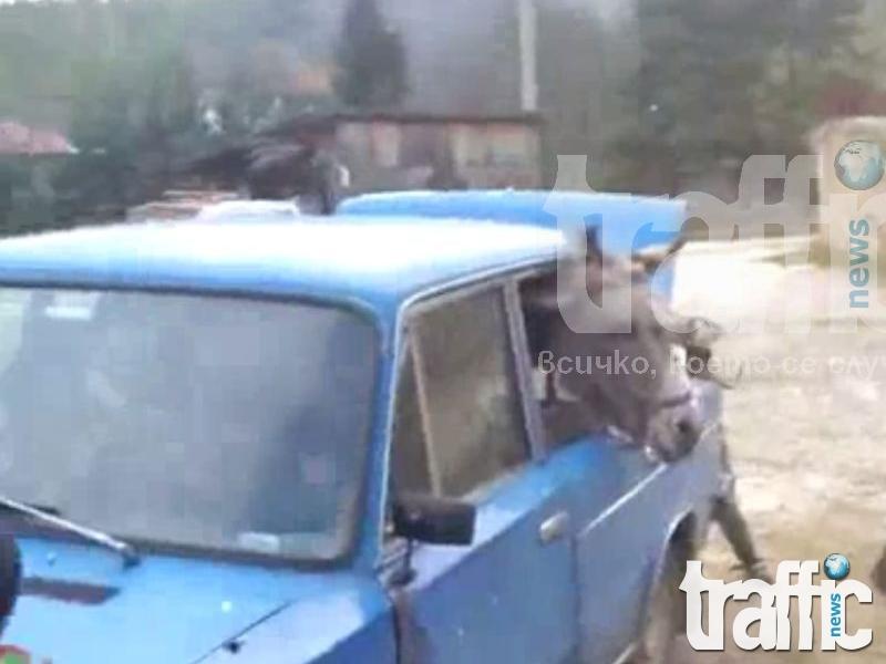 Цигани возят магаре в лада ВИДЕО