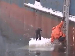 Вижте как едно куче бе спасено от сигурна смърт (ВИДЕО)