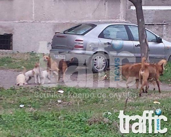 Глутница кучета тормози цял квартал