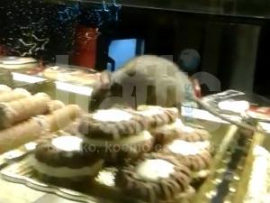 450 000 гърци гледат как пловдивски мишок яде толумбички в сладкарница  ВИДЕО