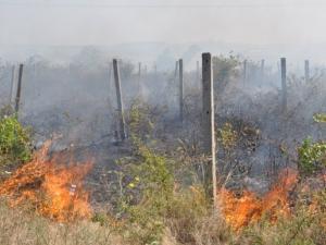 Пожар избухна край Асеновград