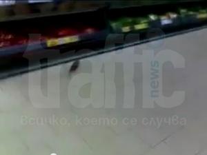 Плъх обикаля из храната в пловдивски Кауфланд СНИМКИ И ВИДЕО