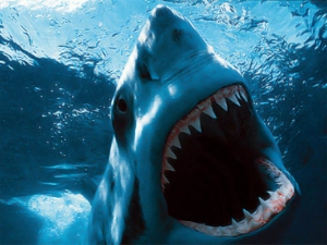 Големи акули затвориха австралийски плажове