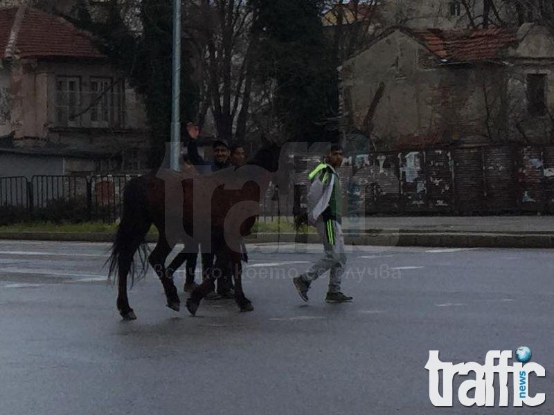 Цигани с кон пресичат на зебра в Кършиака! СНИМКИ