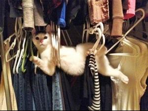 Смешни котки нинджи СНИМКИ