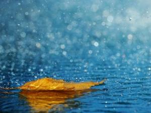 Дъждовно време в Пловдив