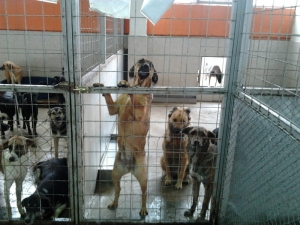 През миналата година от приюта в Пловдив са осиновени 116 кучета