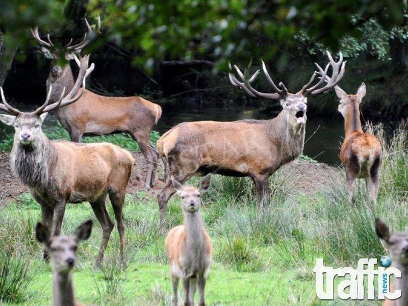 Откриха тридесет мъртви елена в Момчилград