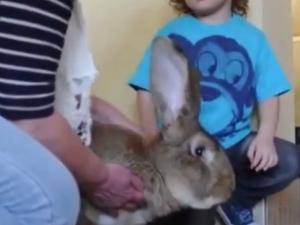 Най-големите зайци в света са баща и син ВИДЕО