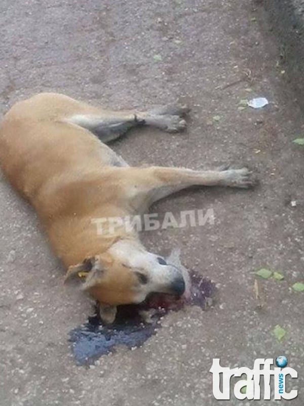 Изроди тровят животни във Враца СНИМКИ 18+