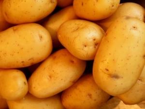 Чужди картофи по 40 стотинки на борсата в Първенец, търговците недоволни ВИДЕО