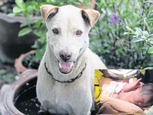 Куче измъкна от помийна яма захвърлено новородено бебе