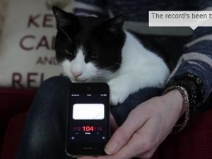 Британски котарак счупи рекорда на Гинес за силно мъркане ВИДЕО