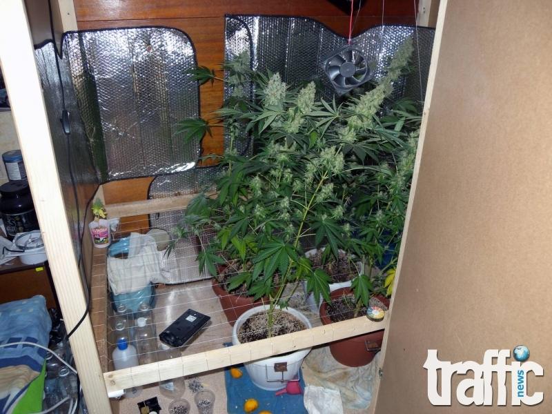 Хванаха 17-годишен пловдивчанин с мини лаборатория за марихуана