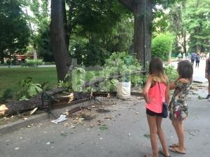 След инцидентa в Цар-Симеоновата градина: Патриотите поискаха оставки в Пловдив