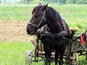 Откраднаха кон и каруца от частен имот в Пловдивско