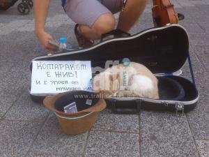Уличен музикант упоява коте в Пловдив, за да събира повече пари? СНИМКИ