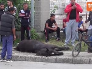 Бус отнесе каруца на оживен булевард, конят загина на място ВИДЕО