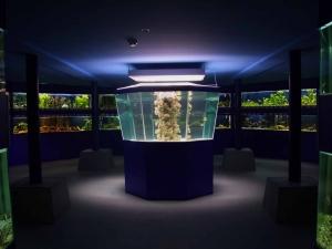 След 2 години ремонт: Откриват официално Природонаучния музей в Пловдив