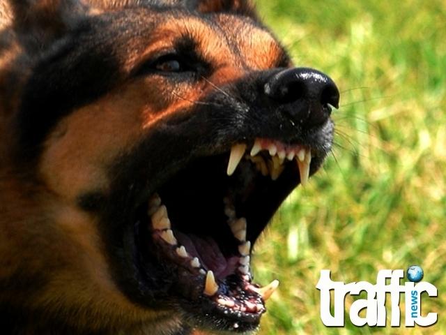 Агресивен пес свали скалпа на 7-годишно момче