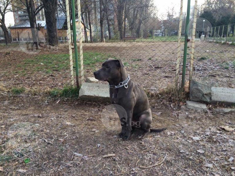Изрод избива домашни кучета в Кършияка със силна отрова, можеща да покоси и човек СНИМКИ