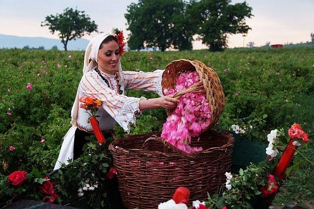 Цената на розовото масло достигна 9000 евро за килограм