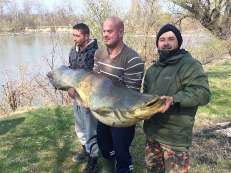 Рибар от Първомай улови сом рекордьор за Марица
