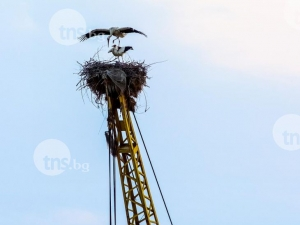 Щъркели избраха автокран на пловдивска фирма да свият гнездо СНИМКИ