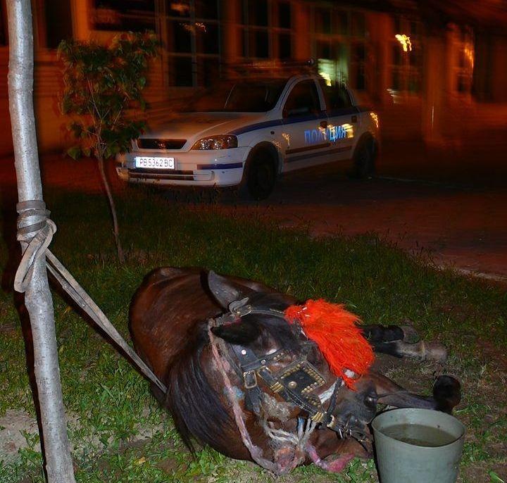 Апашите продължават да вилнеят в Пловдив и региона! Обраха апартамент, посегнаха и на каруца с кон