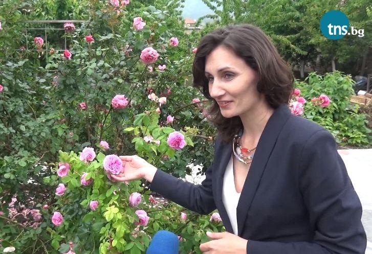 Кметица отглежда над 150 вида рози в двора си край Пловдив ВИДЕО