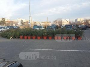 В Пловдив: Елхите за Коледа стигат 100 лева, пловдивчани предпочитат изкуствени ВИДЕО
