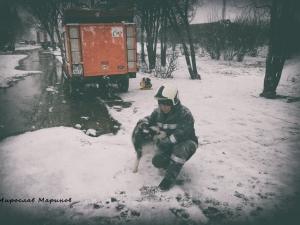 Пожарникар разчувства Фейсбук с нещастните животни на Хитрино СНИМКИ