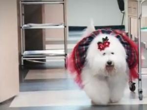 Kуче помага на онкоболни деца в пловдивска болница ВИДЕО