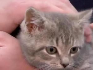 Коте късметлия оцеля след 1000 км под капака на кола