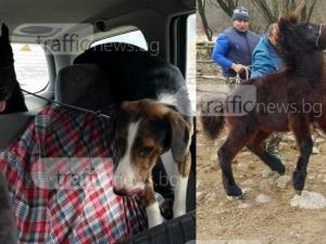 Разказът на хората, които се опитаха да спасят умъртвените четири кончета и две кучета СНИМКИ