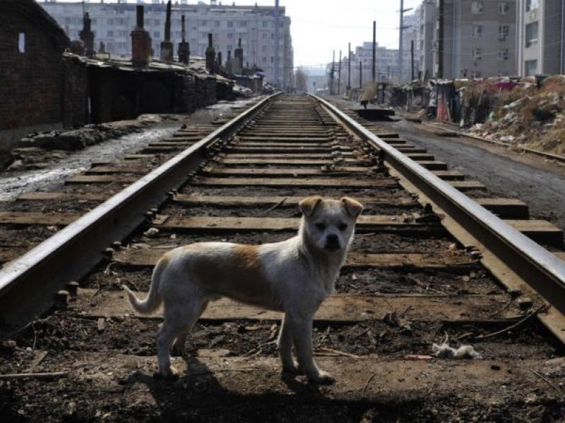 Куче спаси ранен приятел от преминаващи влакове СНИМКА