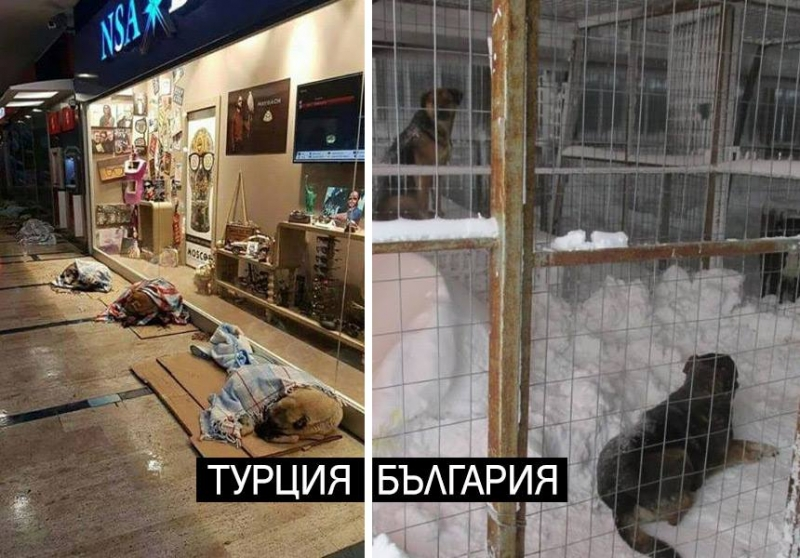 В Турция приютиха бездомните кучета в моловете заради студа